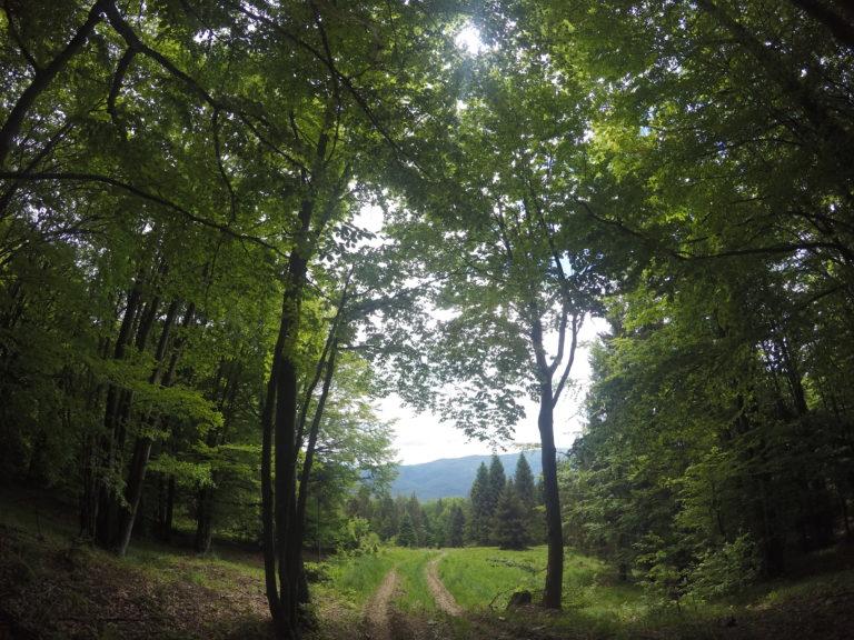 Poloniny National Park - Slovakia