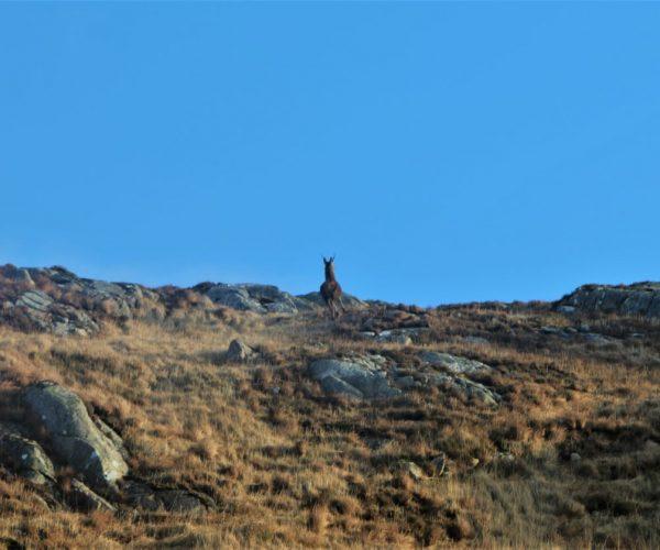 Cairgorms National Park